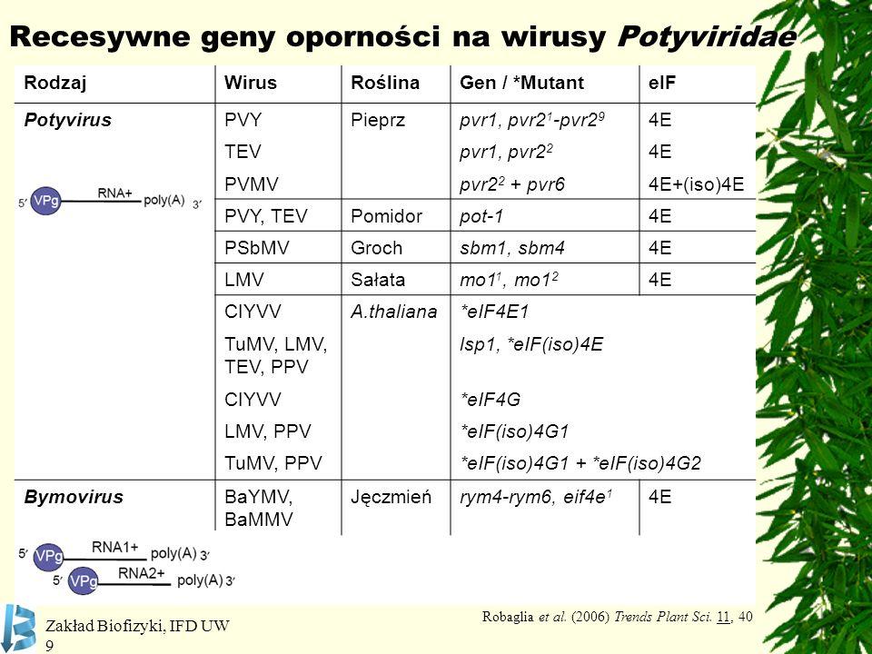 Recesywne geny oporności na wirusy Potyviridae