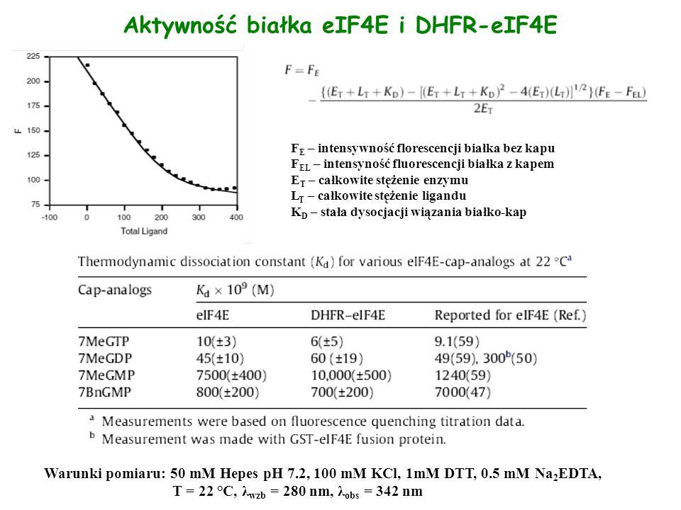 Aktywność białka eIF4E i DHFR-eIF4E