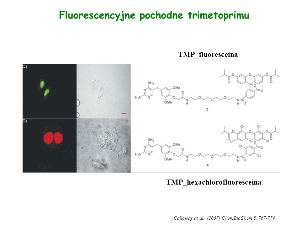 Fluorescencyjne pochodne trimetoprimu TMP_hexachlorofluoresceina