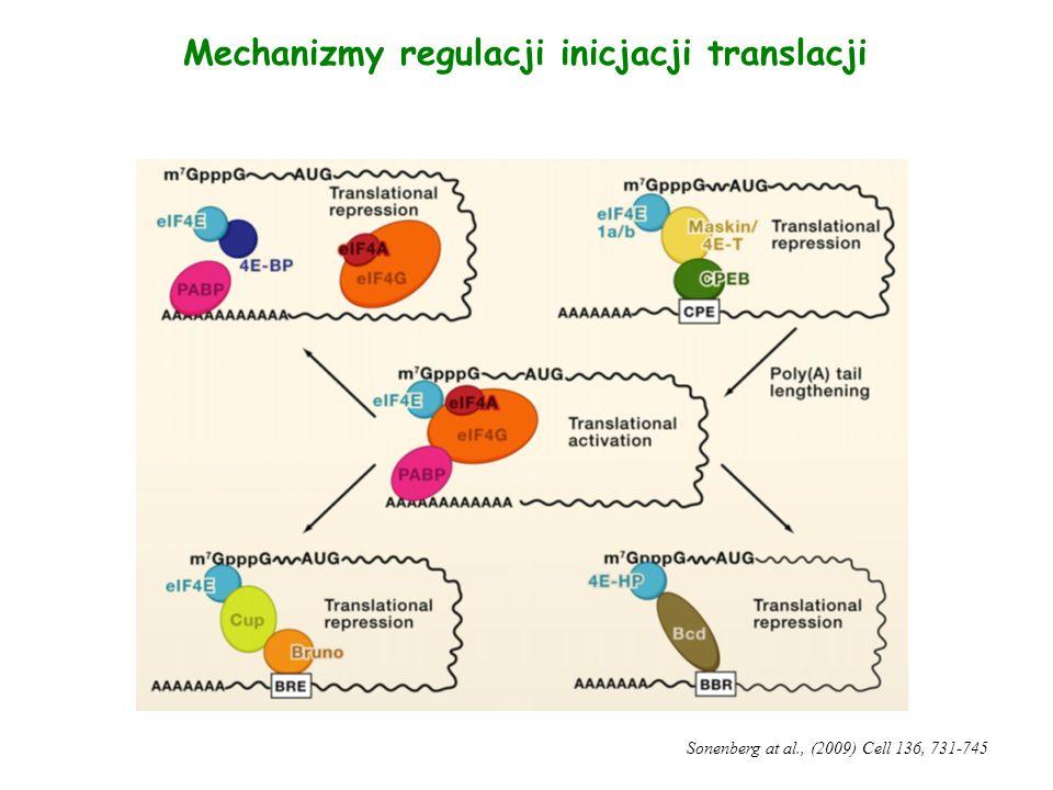 Mechanizmy regulacji inicjacji translacji