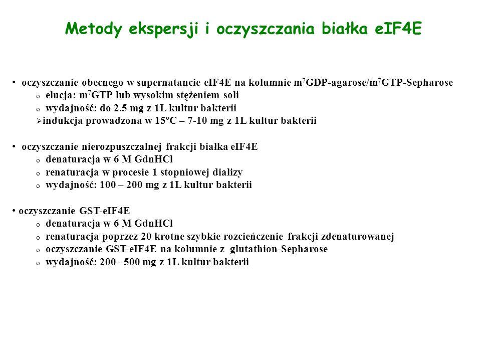 Metody ekspersji i oczyszczania białka eIF4E