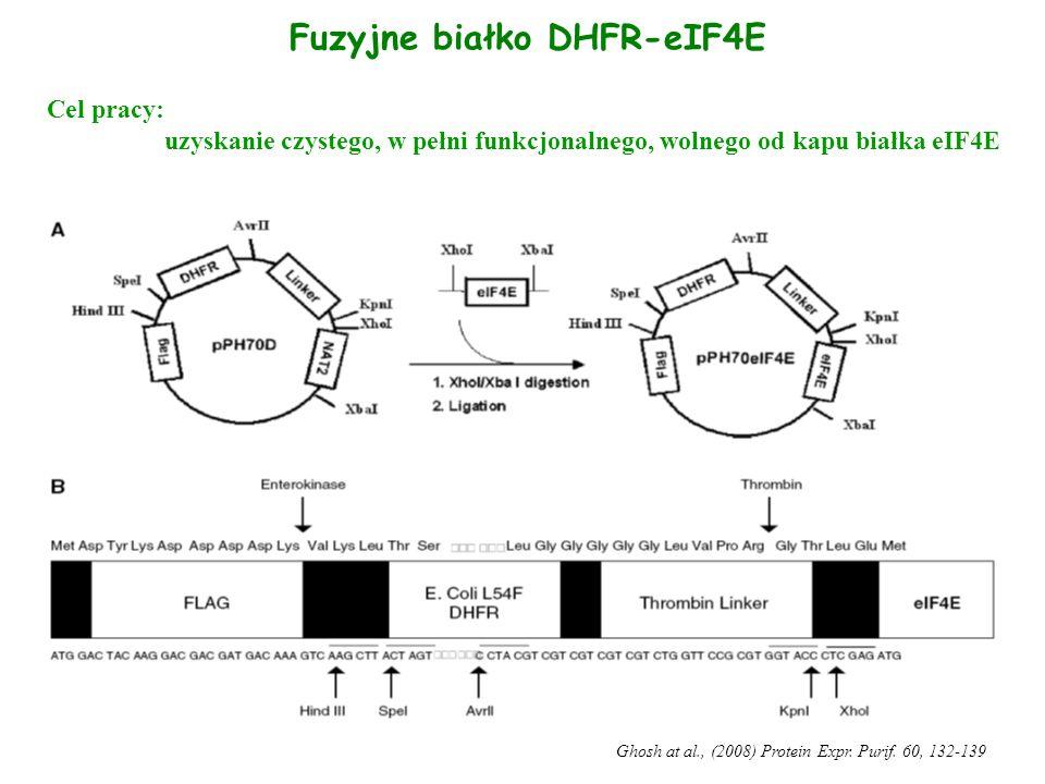 Fuzyjne białko DHFR-eIF4E