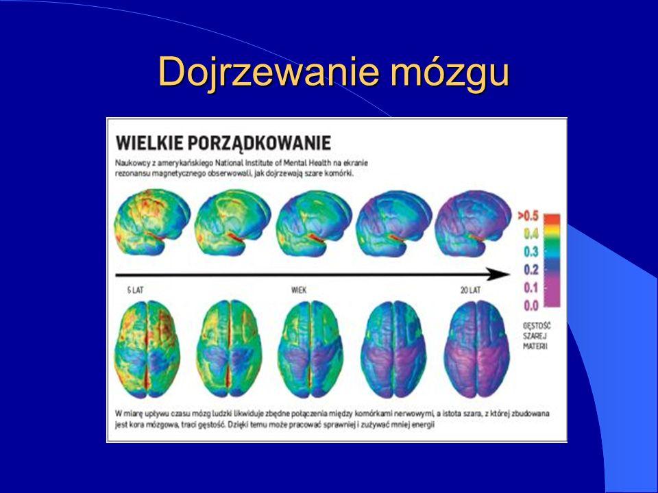 Dojrzewanie mózgu