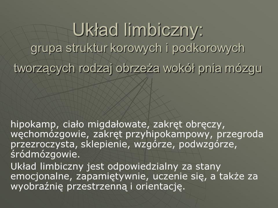 Układ limbiczny: grupa struktur korowych i podkorowych tworzących rodzaj obrzeża wokół pnia mózgu