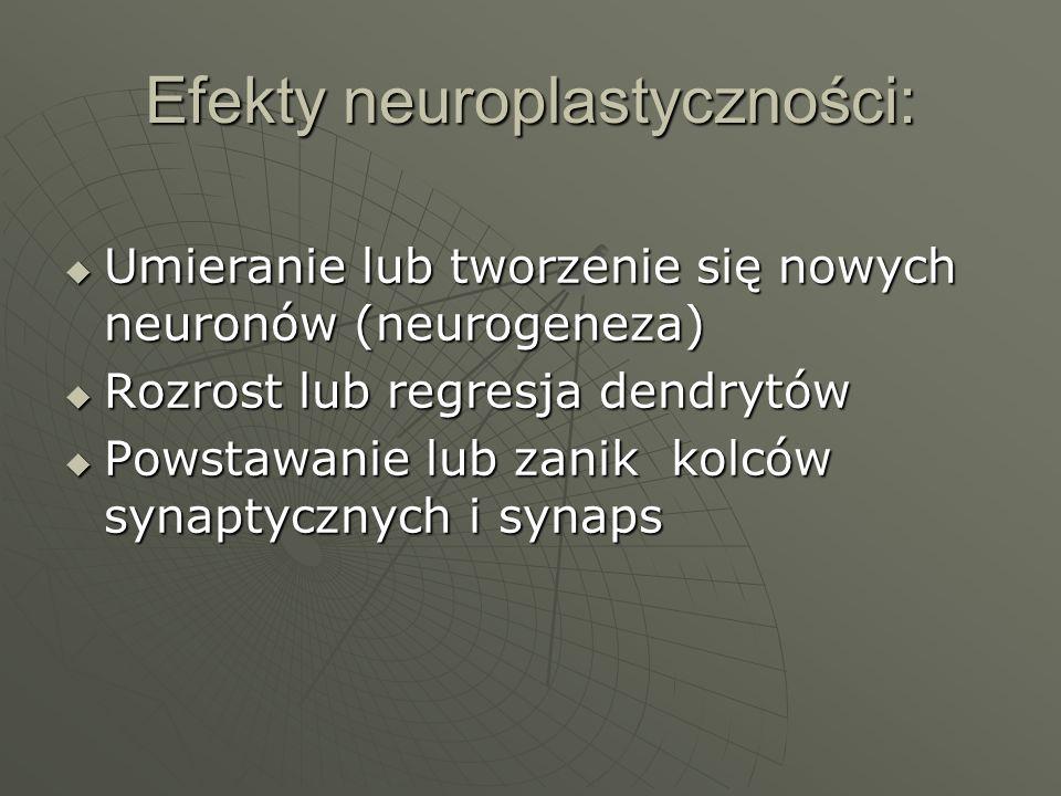 Efekty neuroplastyczności: