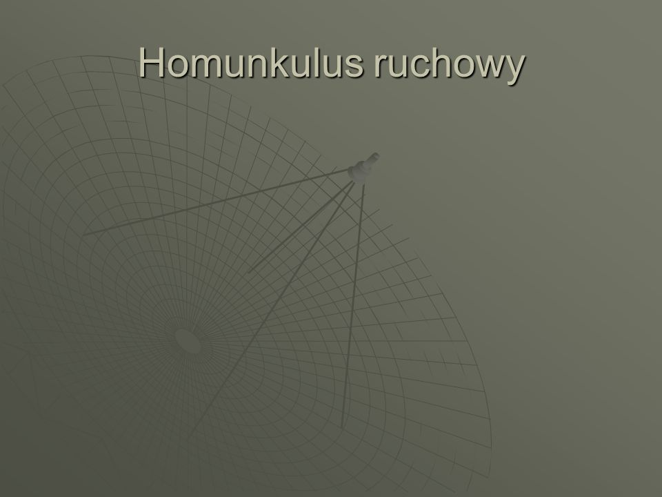 Homunkulus ruchowy
