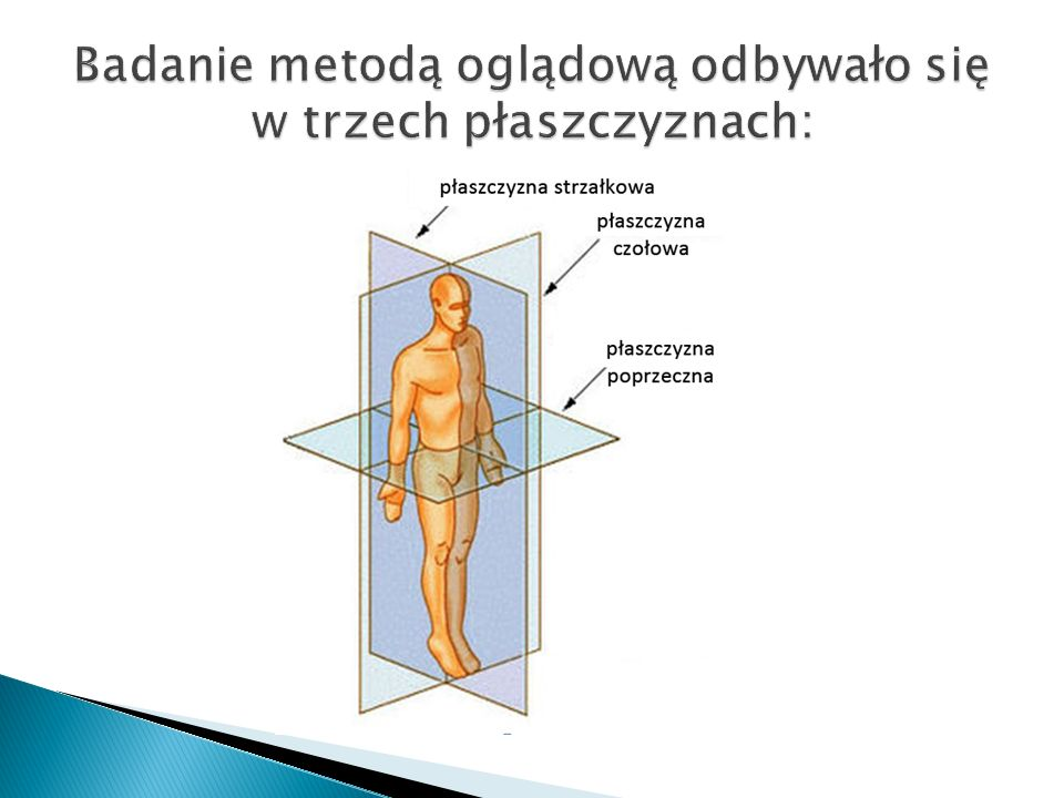 Badanie metodą oglądową odbywało się w trzech płaszczyznach: