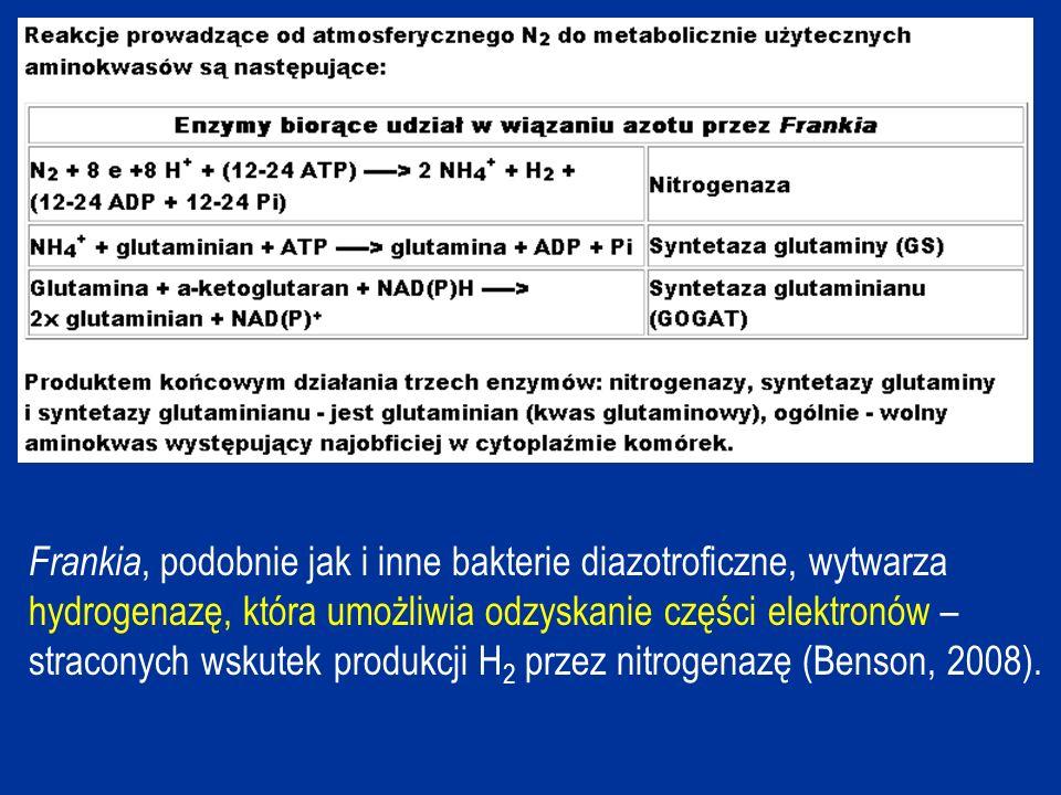 Frankia, podobnie jak i inne bakterie diazotroficzne, wytwarza hydrogenazę, która umożliwia odzyskanie części elektronów – straconych wskutek produkcji H2 przez nitrogenazę (Benson, 2008).
