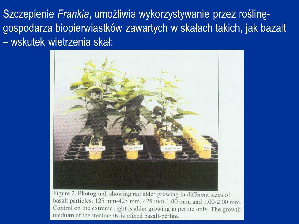 Szczepienie Frankia, umożliwia wykorzystywanie przez roślinę-gospodarza biopierwiastków zawartych w skałach takich, jak bazalt – wskutek wietrzenia skał: