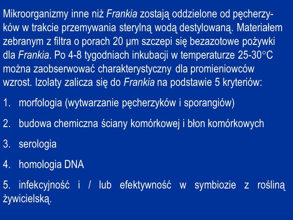 Mikroorganizmy inne niż Frankia zostają oddzielone od pęcherzy-ków w trakcie przemywania sterylną wodą destylowaną. Materiałem zebranym z filtra o porach 20 μm szczepi się bezazotowe pożywki dla Frankia. Po 4-8 tygodniach inkubacji w temperaturze 25-30C można zaobserwować charakterystyczny dla promieniowców wzrost. Izolaty zalicza się do Frankia na podstawie 5 kryteriów: