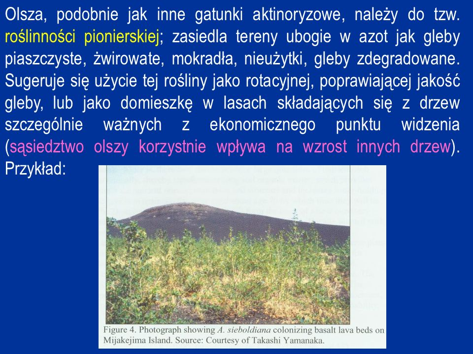 Olsza, podobnie jak inne gatunki aktinoryzowe, należy do tzw