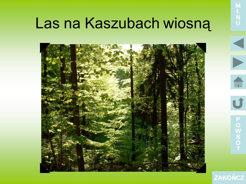 Las na Kaszubach wiosną