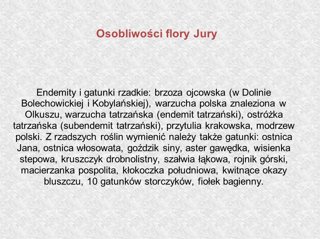Osobliwości flory Jury