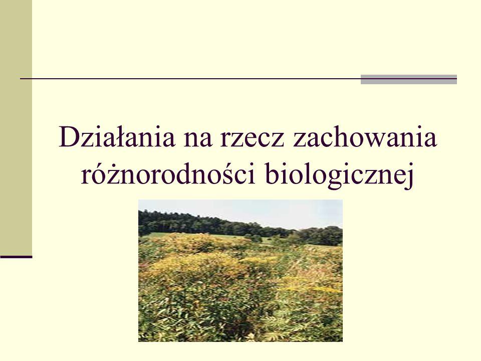 Działania na rzecz zachowania różnorodności biologicznej
