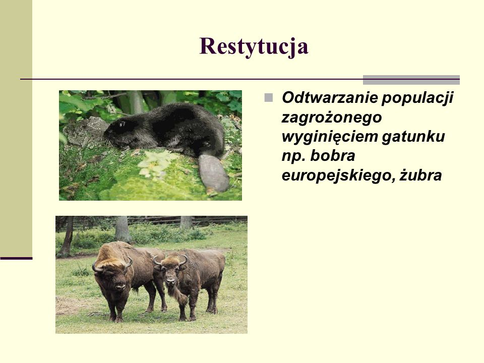 Restytucja Odtwarzanie populacji zagrożonego wyginięciem gatunku np. bobra europejskiego, żubra