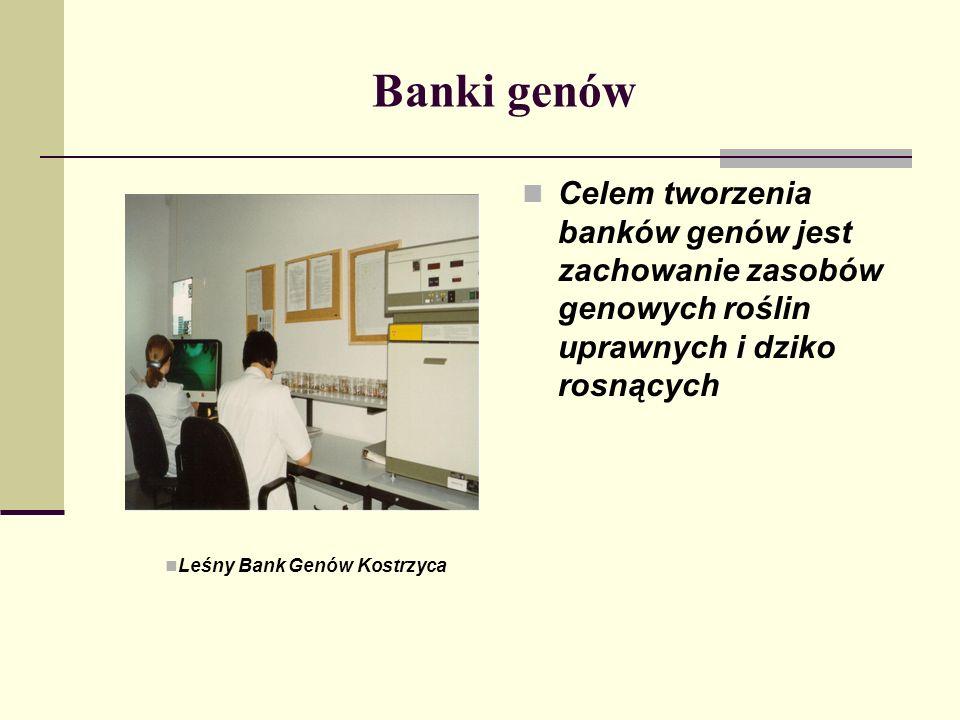 Banki genów Celem tworzenia banków genów jest zachowanie zasobów genowych roślin uprawnych i dziko rosnących.