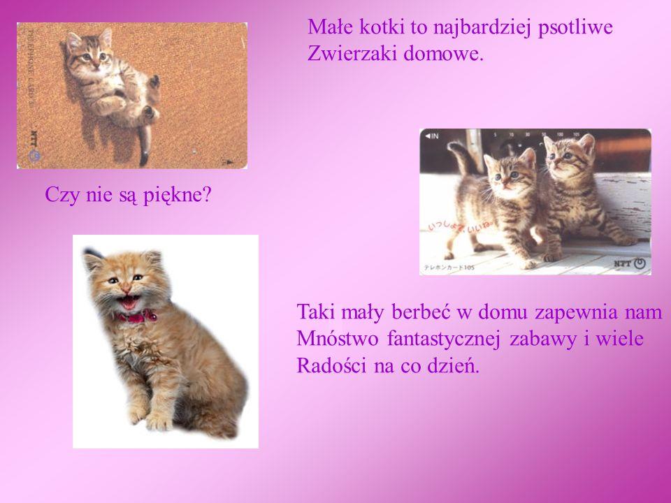Małe kotki to najbardziej psotliwe