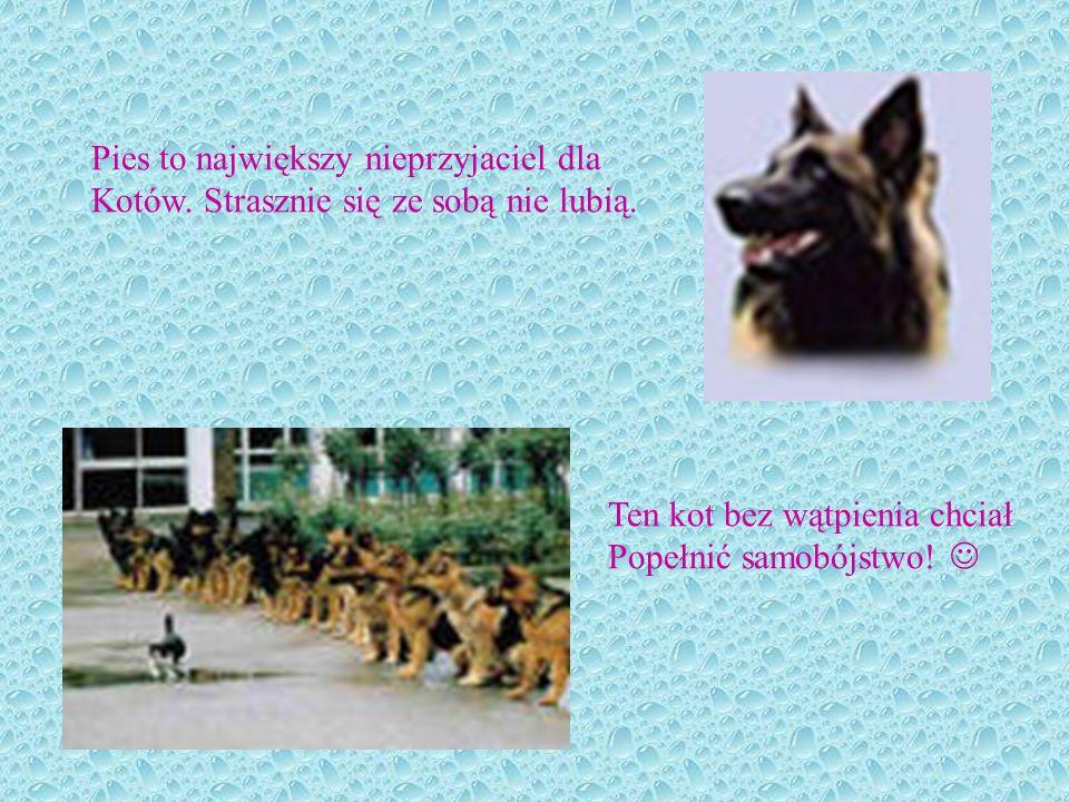 Pies to największy nieprzyjaciel dla
