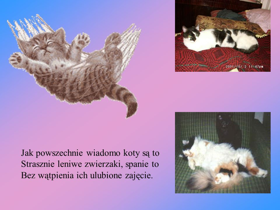 Jak powszechnie wiadomo koty są to
