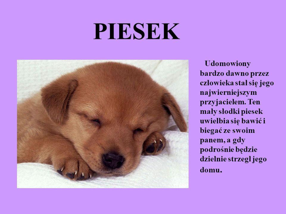 PIESEK