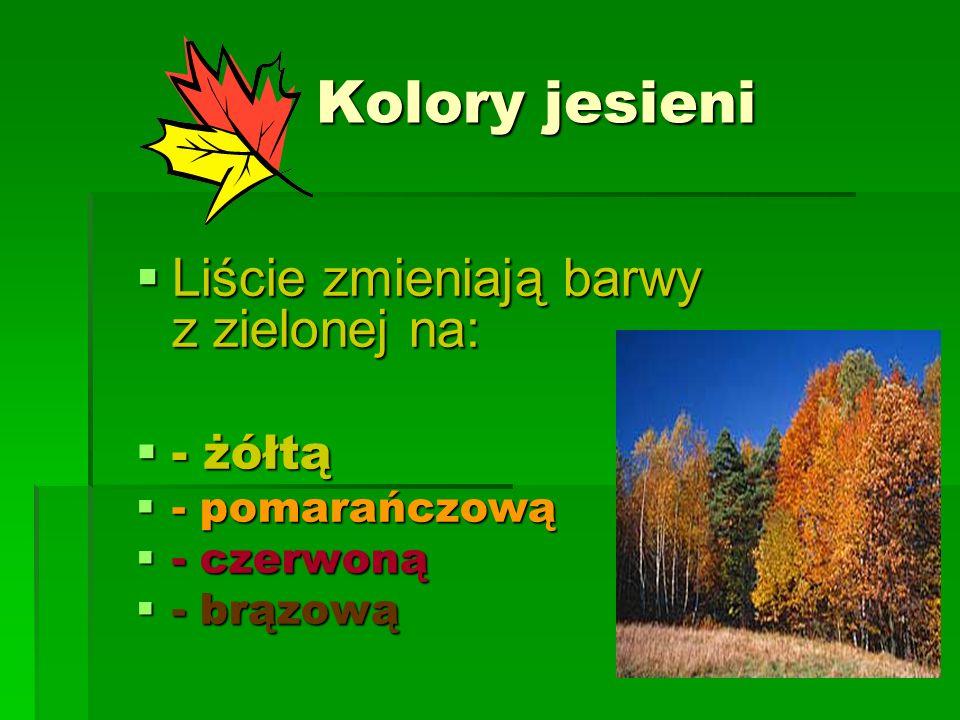 Kolory jesieni Liście zmieniają barwy z zielonej na: - żółtą