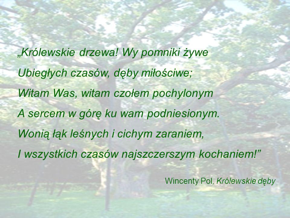 """""""Królewskie drzewa! Wy pomniki żywe Ubiegłych czasów, dęby miłościwe;"""