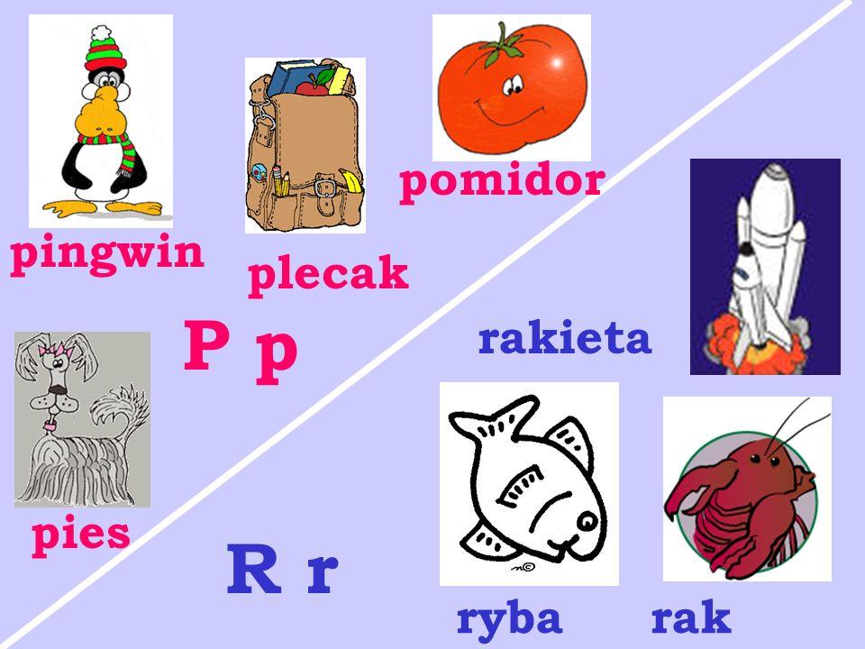 pomidor pingwin plecak P p rakieta pies R r ryba rak