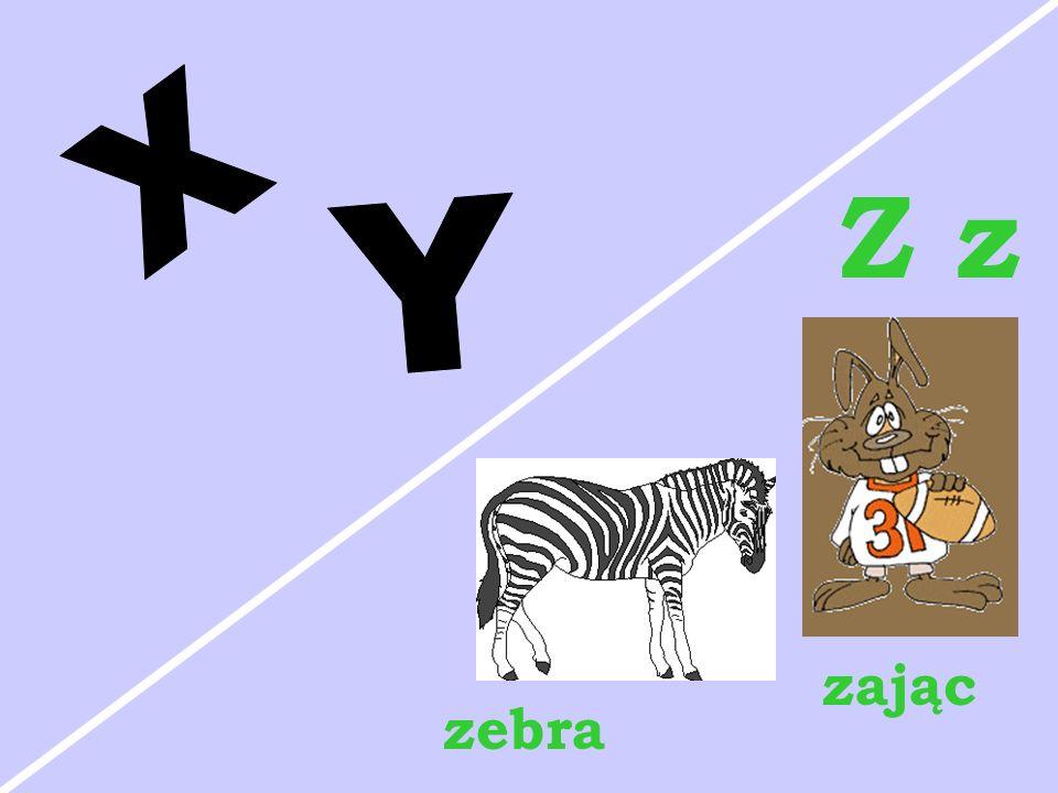 X Z z Y zając zebra