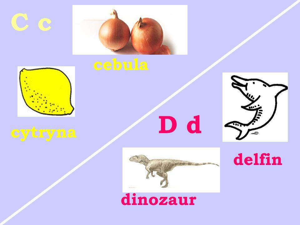 C c cebula D d cytryna delfin dinozaur