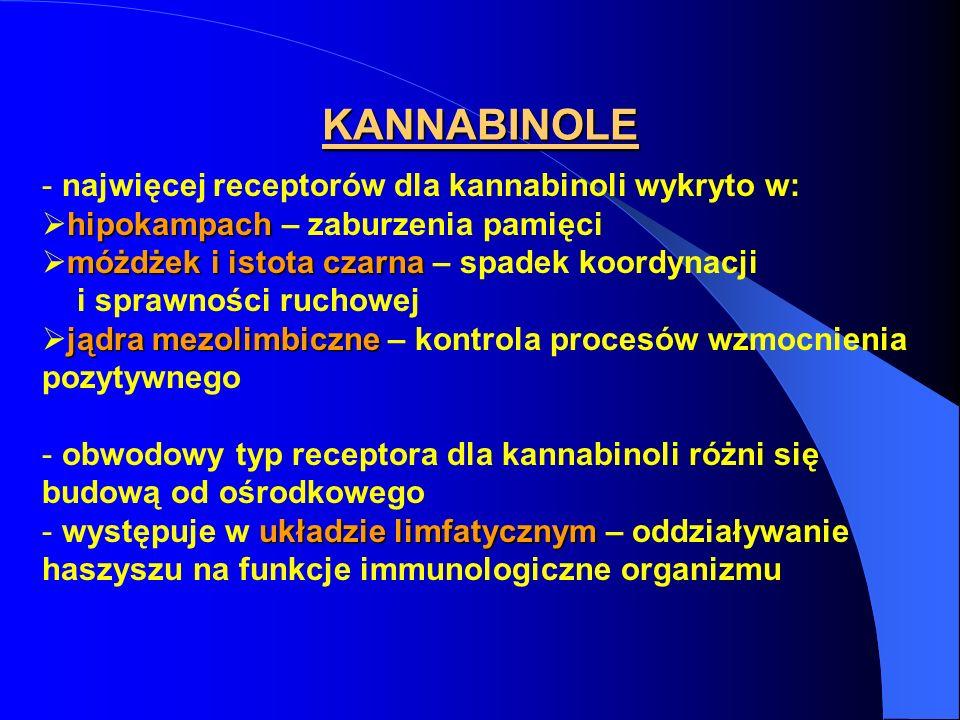 KANNABINOLE najwięcej receptorów dla kannabinoli wykryto w: