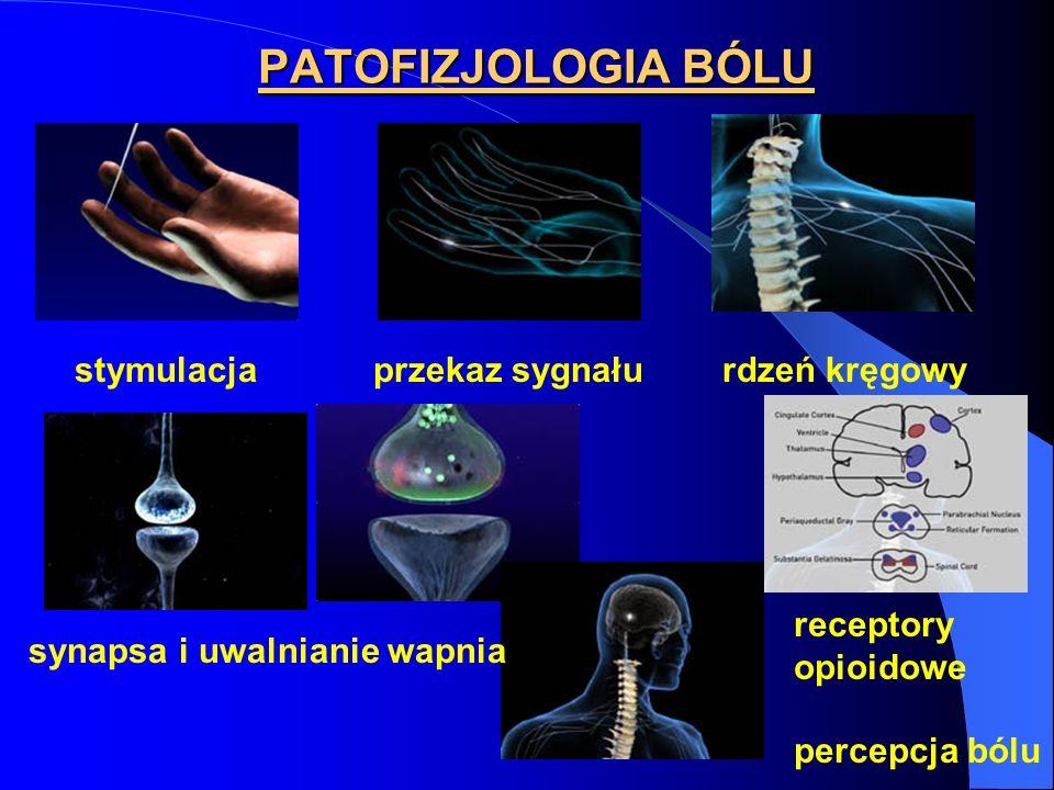 PATOFIZJOLOGIA BÓLU stymulacja przekaz sygnału rdzeń kręgowy