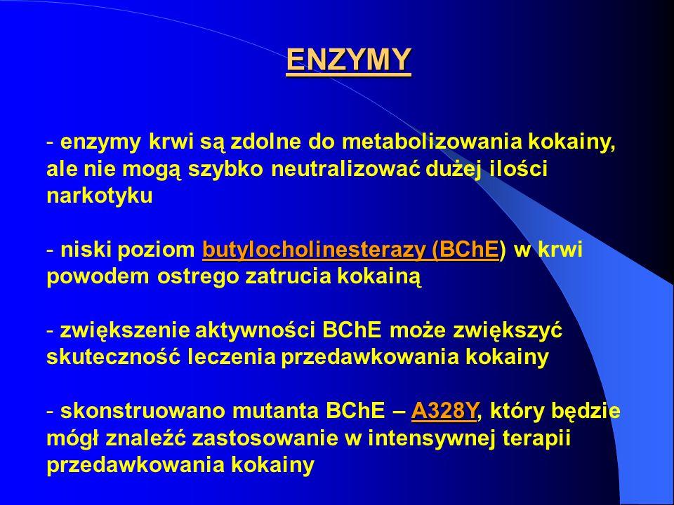 ENZYMY enzymy krwi są zdolne do metabolizowania kokainy, ale nie mogą szybko neutralizować dużej ilości narkotyku.