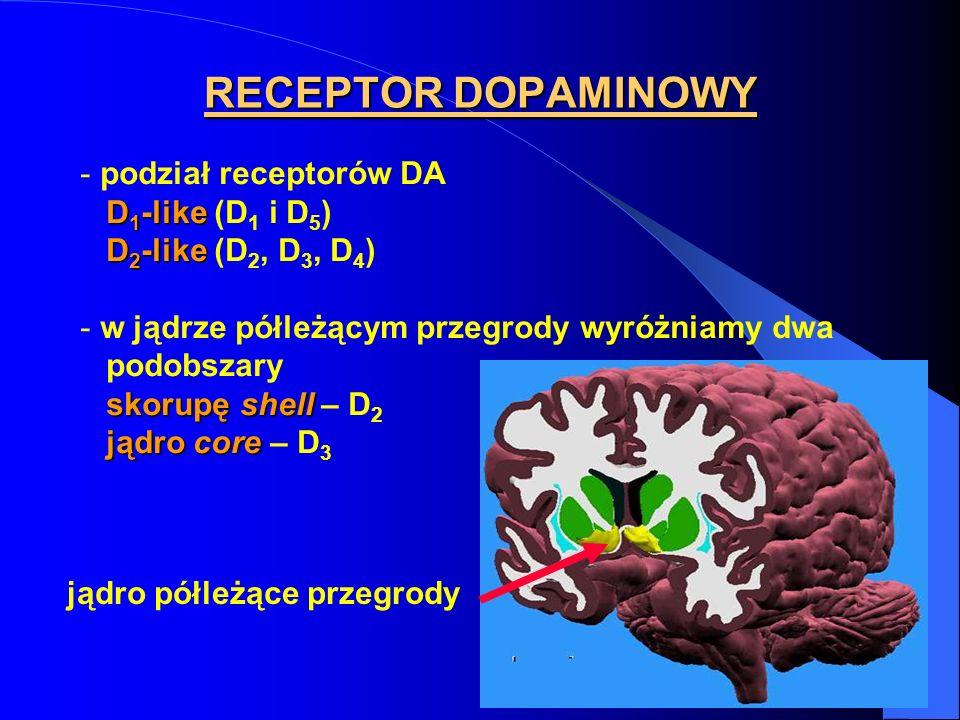 RECEPTOR DOPAMINOWY podział receptorów DA D1-like (D1 i D5)