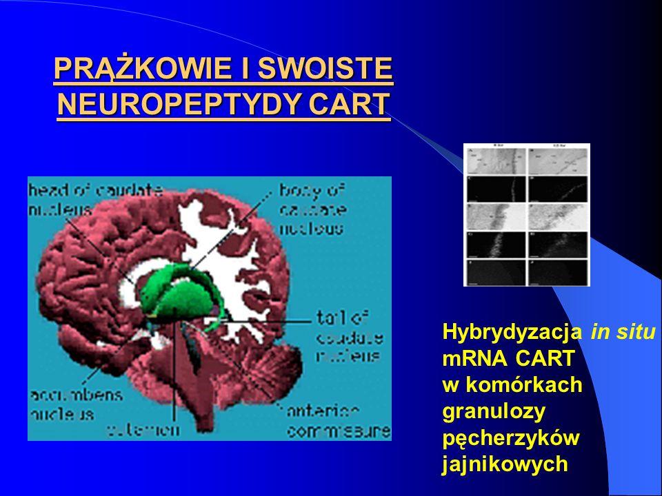 PRĄŻKOWIE I SWOISTE NEUROPEPTYDY CART
