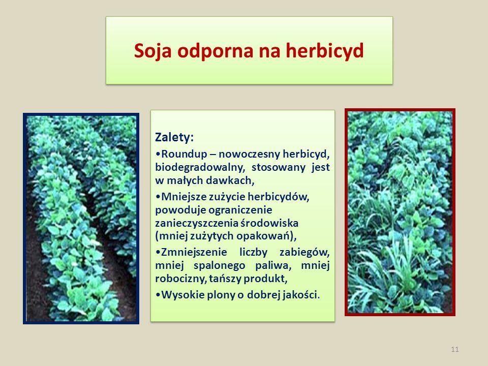 Soja odporna na herbicyd