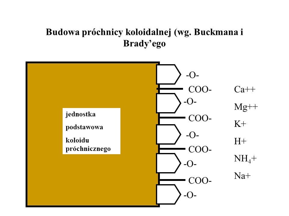 Budowa próchnicy koloidalnej (wg. Buckmana i Brady'ego