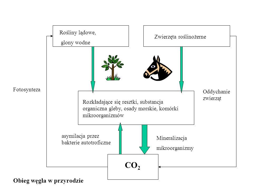 CO2 Obieg węgla w przyrodzie Rośliny lądowe, glony wodne