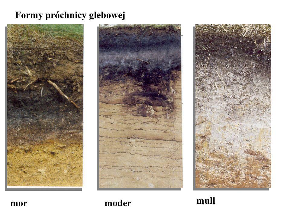 Formy próchnicy glebowej