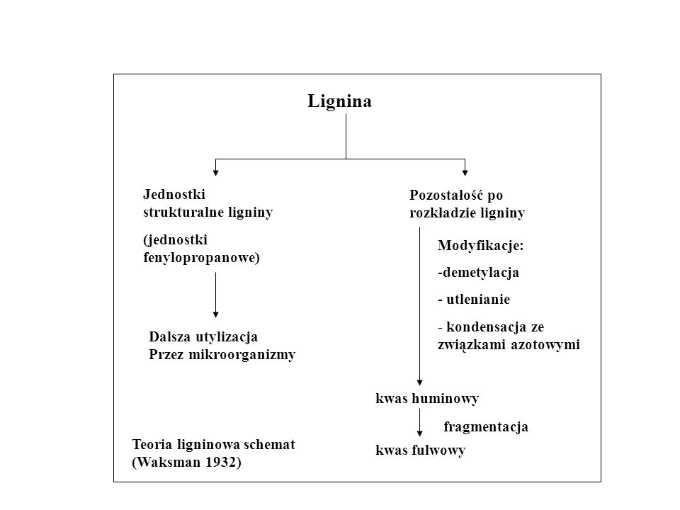 Lignina Jednostki strukturalne ligniny Pozostałość po