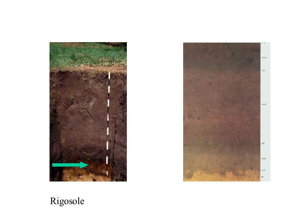 Rigosole