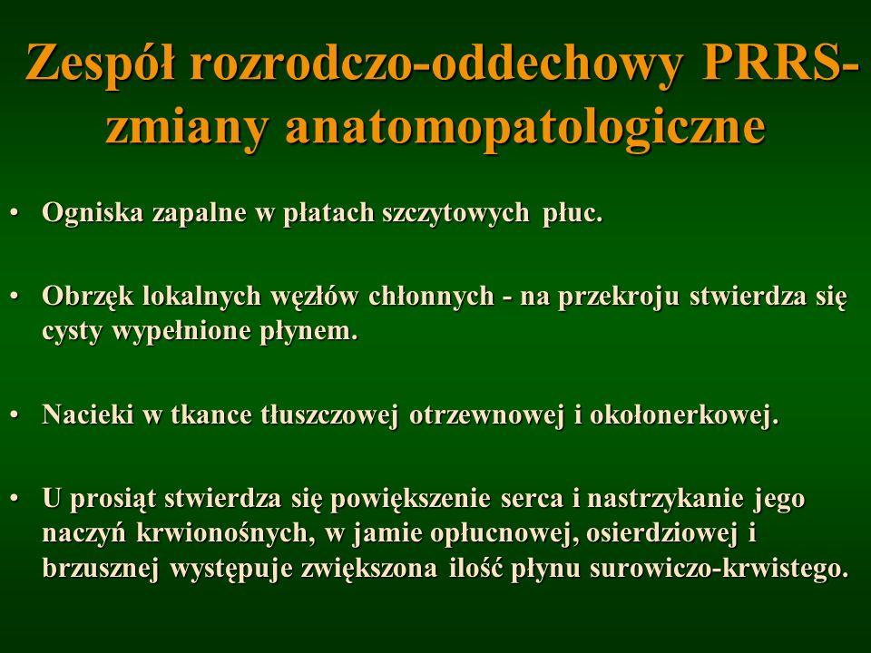 Zespół rozrodczo-oddechowy PRRS- zmiany anatomopatologiczne