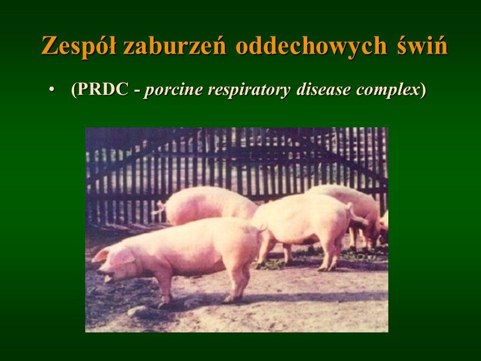 Zespół zaburzeń oddechowych świń