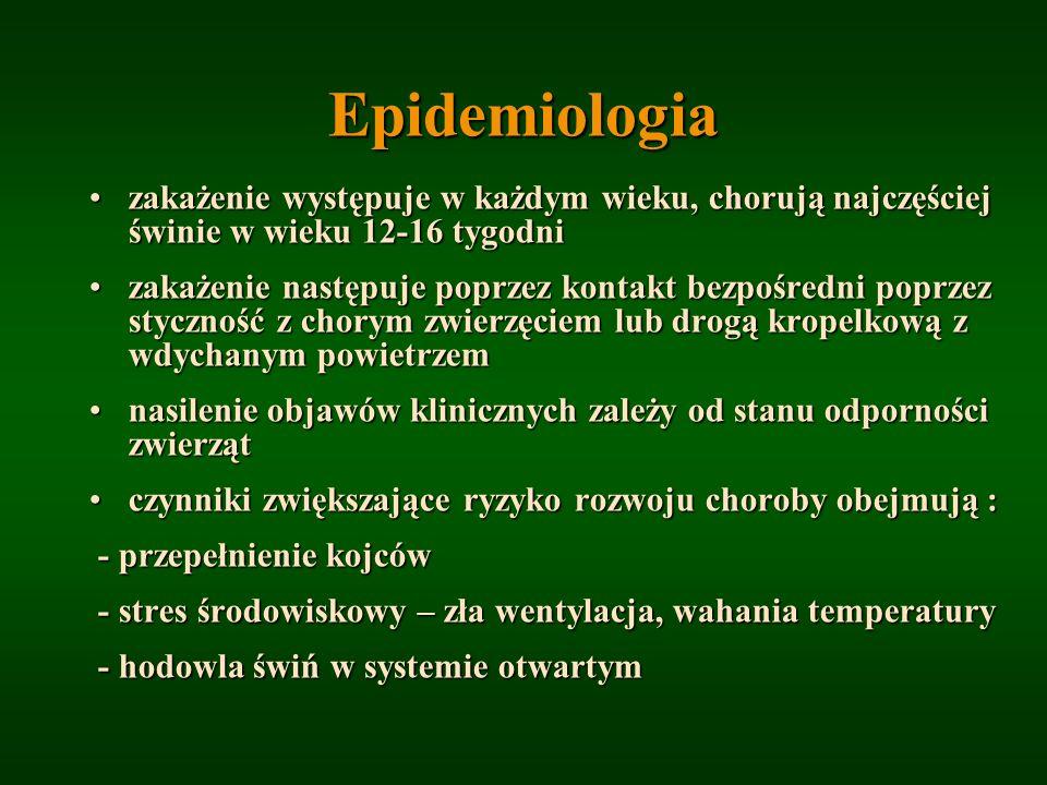 Epidemiologia zakażenie występuje w każdym wieku, chorują najczęściej świnie w wieku 12-16 tygodni.