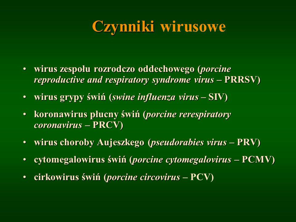 Czynniki wirusowe wirus zespołu rozrodczo oddechowego (porcine reproductive and respiratory syndrome virus – PRRSV)