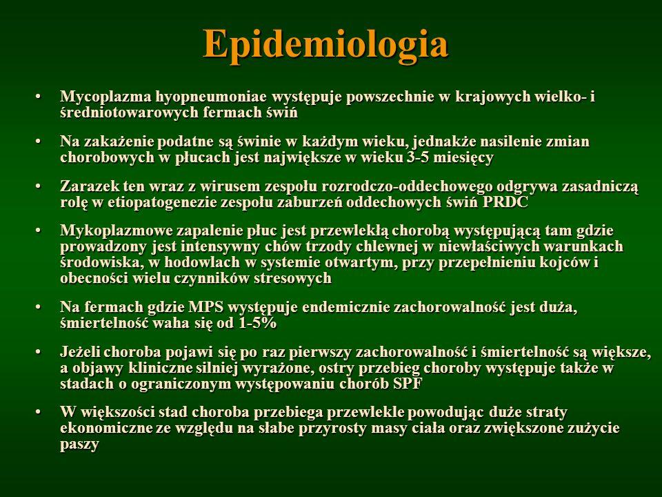 Epidemiologia Mycoplazma hyopneumoniae występuje powszechnie w krajowych wielko- i średniotowarowych fermach świń.