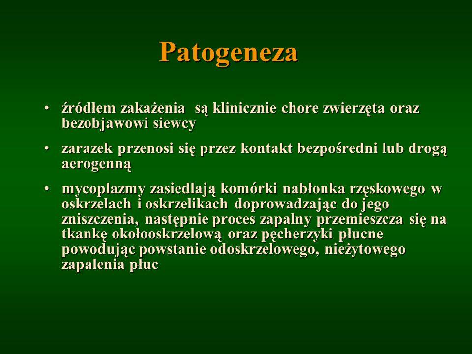 Patogeneza źródłem zakażenia są klinicznie chore zwierzęta oraz bezobjawowi siewcy.