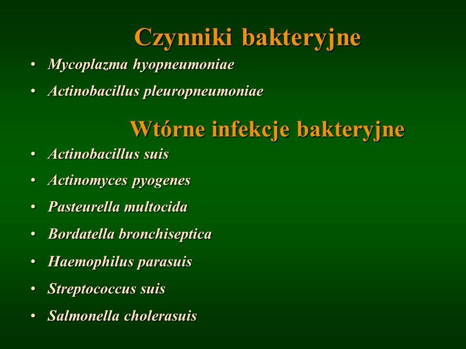 Czynniki bakteryjne Wtórne infekcje bakteryjne
