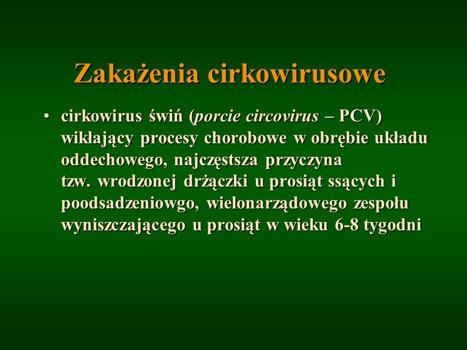 Zakażenia cirkowirusowe