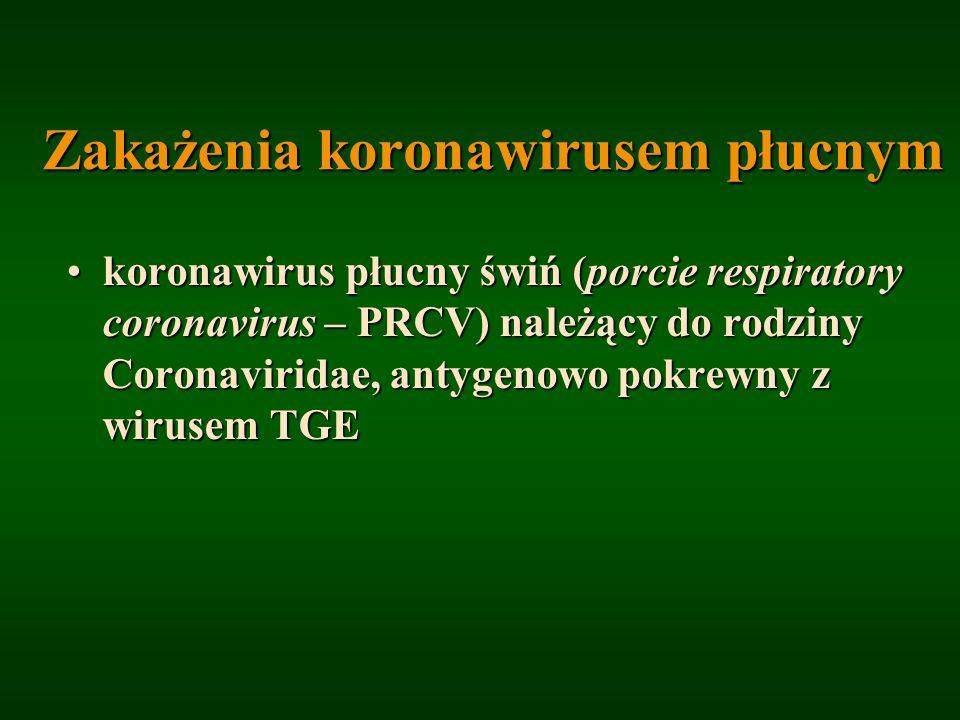 Zakażenia koronawirusem płucnym