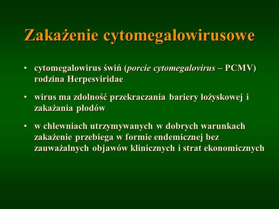 Zakażenie cytomegalowirusowe